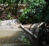 Free Photo - Gators at Surabaya Zoo