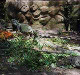 Free Photo - Lizards at Surabaya Zoo