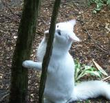 Free Photo - White Cat at Play