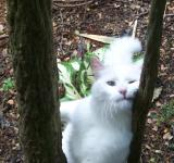 Free Photo - White Cats at Play