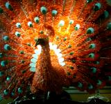 Free Photo - Peacock Coral Statue behind glass