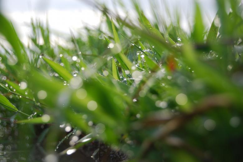 Free Stock Photo of Wet grass Created by Rhema Prabhata