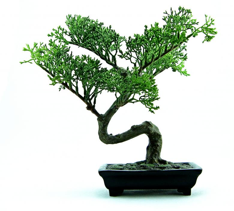 Free Stock Photo of Green plastic bonsai Created by homero chapa