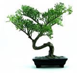 Free Photo - Green plastic bonsai