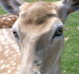 Free Photo - Young deer