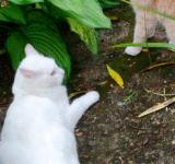 Free Photo - Cats fight standoff