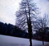 Free Photo - Lake tree
