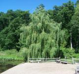 Free Photo - Natural Beauty of Hidden Lake Gardens