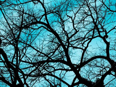 Branches - Free Stock Photo