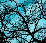 Free Photo - Branches