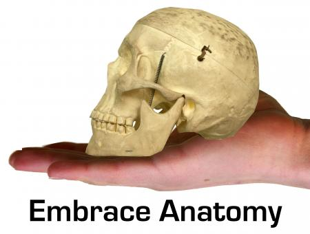 Anatomy - Free Stock Photo