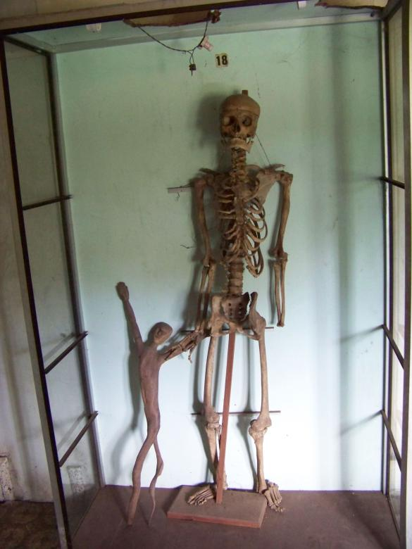 Free Stock Photo of Skeleton Created by Nirodha Abeywardana