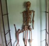 Free Photo - Skeleton