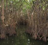Free Photo - Mangroves