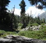 Free Photo - Fairy Meadow, Nanga Parbat