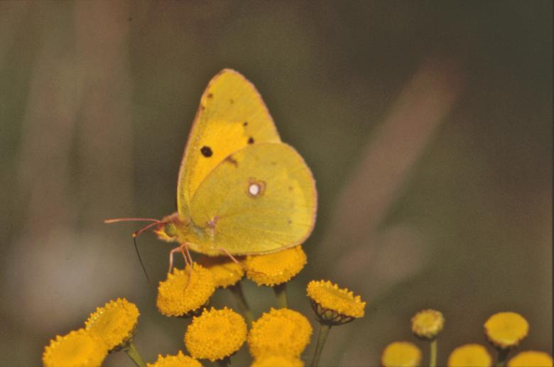 Free Stock Photo of Yellow butterfly Created by MUNCH PIERRE