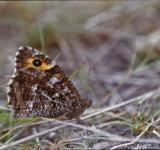 Free Photo - Brown butterfly