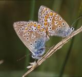 Free Photo - Butterflies