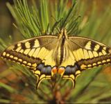 Free Photo - Yellow butterfly