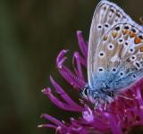 Free Photo - Blue butterfly