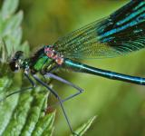 Free Photo - Blue dragonfly