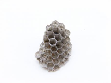 Wasps nest - Free Stock Photo