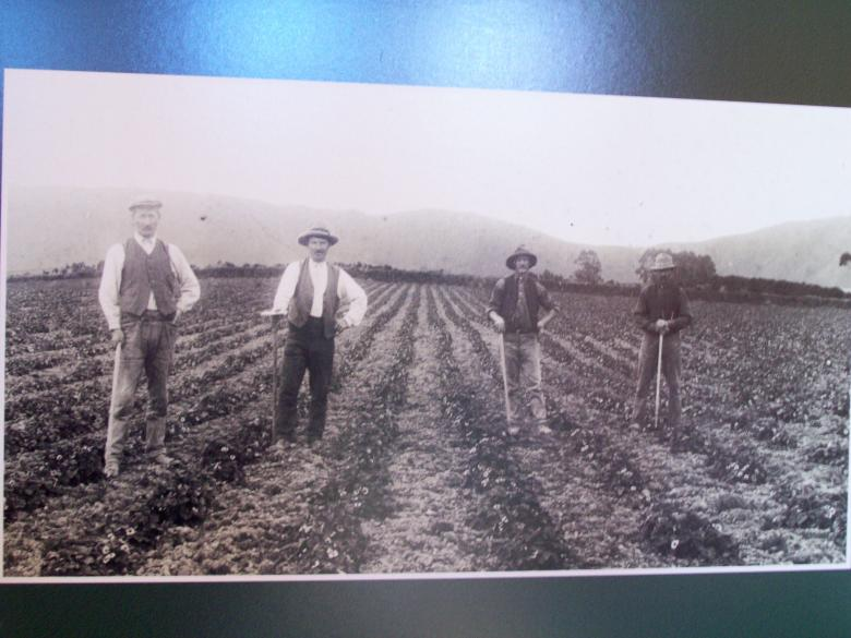 Free Stock Photo of 19c Strawberry pickers  Hook/ Butlers Be Created by Peter Alexander Robb