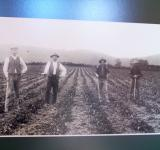 Free Photo - 19c Strawberry pickers  Hook/ Butlers Be