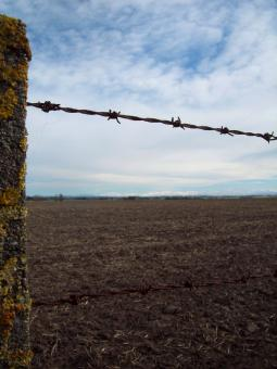 Barb wire fence, South Canterbury - Free Stock Photo