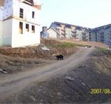 Free Photo - Bear In Construction Zone