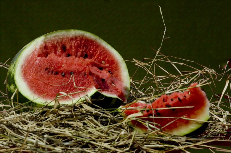 Watermelon Free Photo