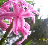 Free Photo - Pretty In Pink