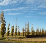 Free Photo - Otago- Canterbury Autumn / Fall