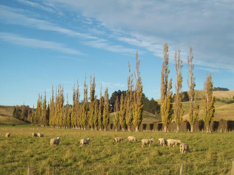 Free stock image of Otago- Canterbury Autumn created by Peter Alexander Robb