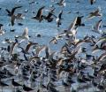 Free Photo - Way Too Many Gulls