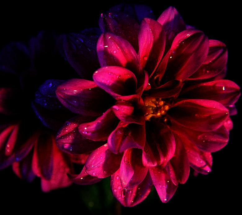 Flower In the Dark Free Photo