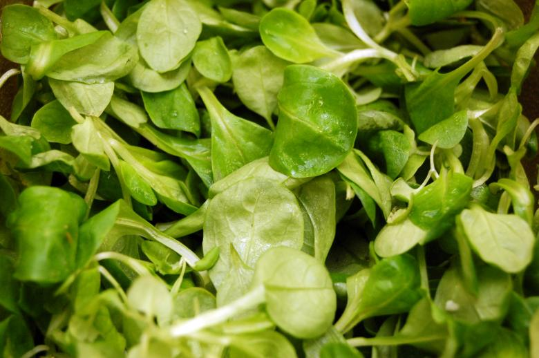 Free Stock Photo of Green salad Created by pxl666