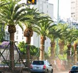 Free Photo - Palm avenue