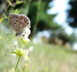 Free Photo - Croatian Butterfly