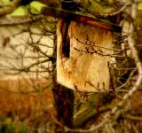 Free Photo - Bird-Box