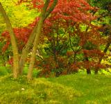 Free Photo - Colorful Forest