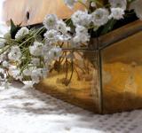 Free Photo - White flowers in a box