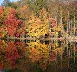 Free Photo - Fall Foliage