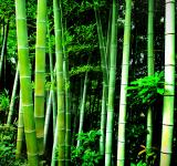 Free Photo - Green bamboo