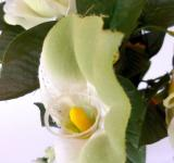 Free Photo - White Rose