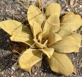 Free Photo - Yellow plant