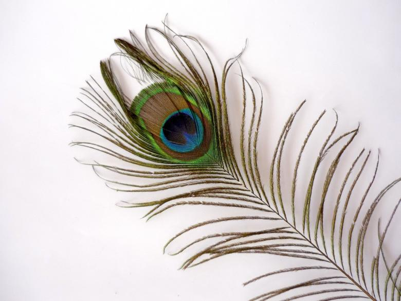 Free Stock Photo of Peacock Feather Created by Bilal Aslam