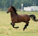 Free Photo - Horse in the Netherlands