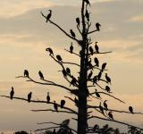 Free Photo - Cormorants Birds