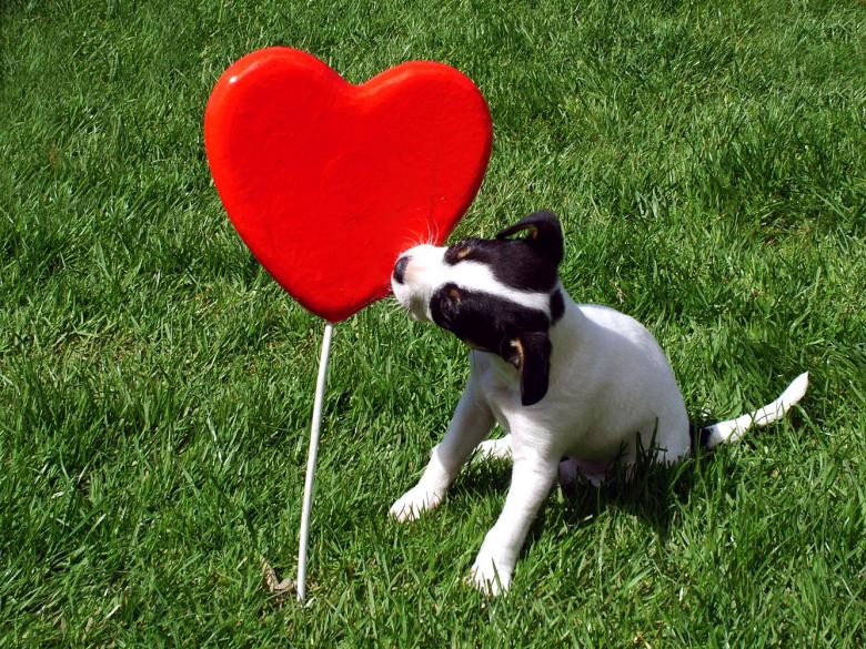 Free Stock Photo of Puppy kissing a heart Created by Muzz